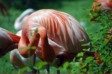 Prágai Állatkert